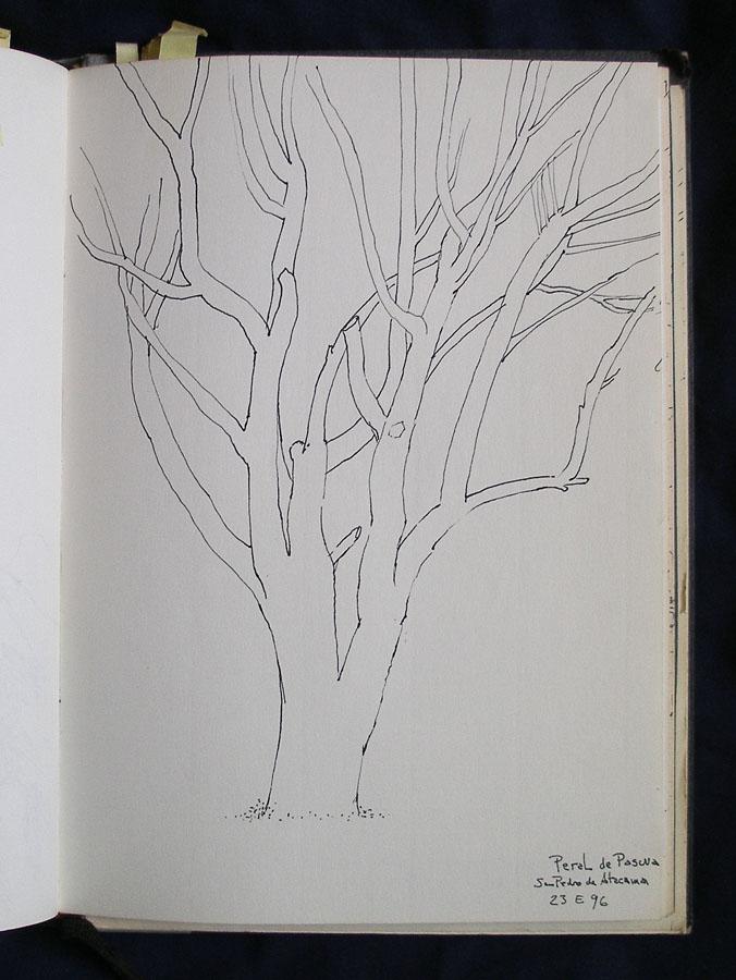 Luis Pita | Cuaderno de Apuntes de Viajes | Travel Sketchbooks | Outline sketch of a naked tree | Peral de pascua | desert of Atacama | Antofagasta | 006/ Peral en San Pedro de Atacama, Chile  | Ink line drawing | Dibujo de línea a tinta |