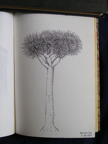Luis Pita | Cuaderno de Viajes | Travel Sketchbooks | 019/ Puerto de la Cruz - Canarias (2001)  | Ink line drawing | Dibujo de línea a tinta | Draco de Tenerife | Dragon Tree | Canary Islands