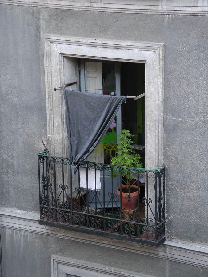 Luis Pita | Fotografía | Photography | Visiones exteriores | Exterior Visions |  (2010) Balcón - Madrid | Marijuana plant in an old ramshackle balconie in downtown madrid | planta de Marihuana en un viejo balcón desvencijado en el centro de madrid