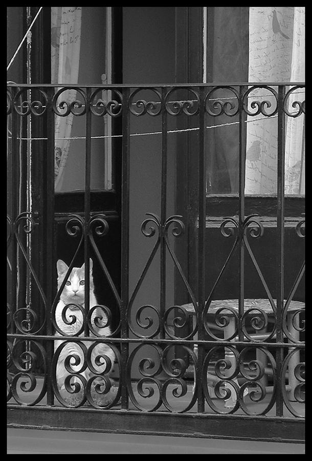 © Luis Pita Moreno _ Balcones 04 (2016) Cazador cazado